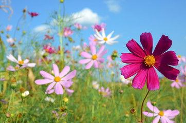 flowers on the meadow