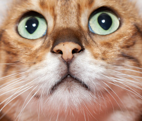 Extreme close up of cat's nose and mouth