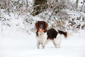 Kl. Muensterlaender im Schnee