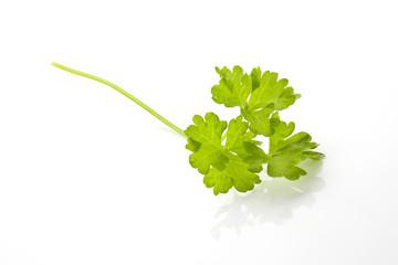 Parsley leaf isolated.