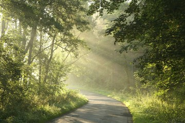 Keuken foto achterwand Bos in mist Country road running through the spring deciduous forest at dawn