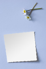 Daisies and old photo paper on blue background