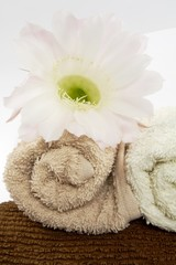 towels and flower
