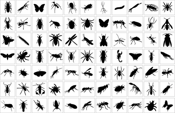 collection of bugs - vector
