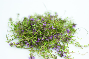Herbal medicine,forest thyme on white background