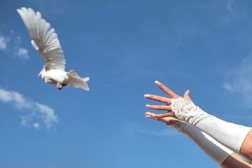 Hochzeitstaube fliegen lassen aus Hand der Braut