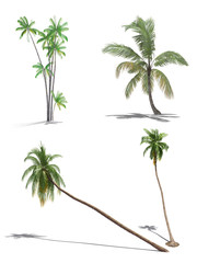 set of 3d palms