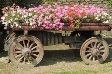wooden cart full of pink, red and white flowers