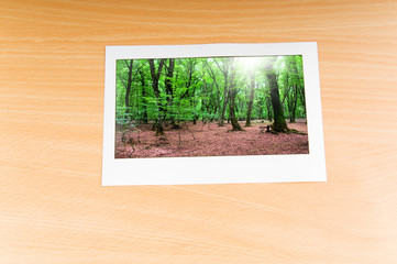 Forest on the picture frames