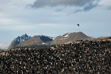Beagle channel - Flock of birds