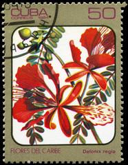 CUBA - CIRCA 1984 Delonix