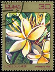CUBA - CIRCA 1984 Plumieria