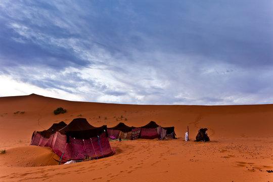 Bedouin tents in the Sahara Desert