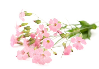 delicate pink flowers