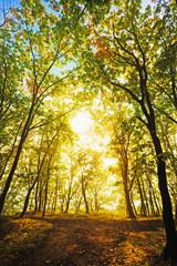 sunlight through autumn leaves