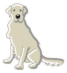 Labrador sitting