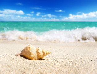 seashell on the beach (shallow DOF)