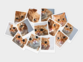 Funny orange cat, collage of photos for your design