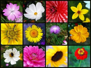 FLOWERS Collage (poster summer bloom blossom photos)