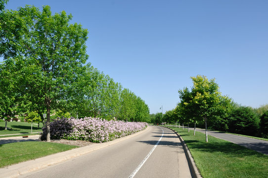 Street With Landscaped Median