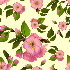 Seamless pattern with spring apple blossom