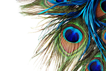 Papiers peints Paon Peacock Feather