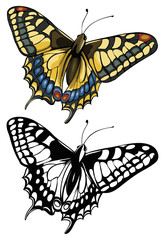 Vector illustration of butterfly Swallowtail (Papilio machaon)