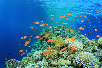 Beautiful Coral Reef at the Blue Hole, Red Sea
