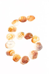 The number six in seashells on white