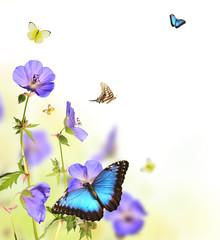 Butterflies in blooming meadow