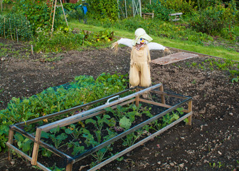 Allotment with Scarecrow