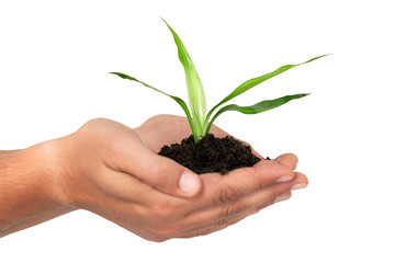 Men´s hands holding young plant with Clipping Path