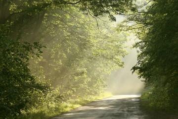 Keuken foto achterwand Bos in mist Lane running through the spring deciduous forest at dawn