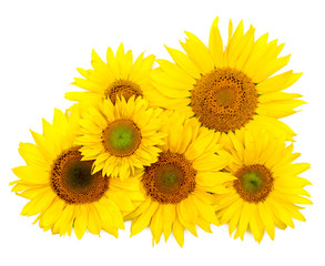 Beautiful yellow Sunflower background