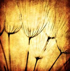 Fotorolgordijn Paardebloemen en water Grunge abstract dandelion flower background