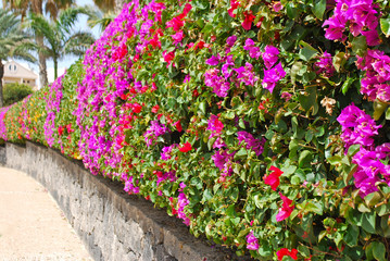 A spanish wall of flowers
