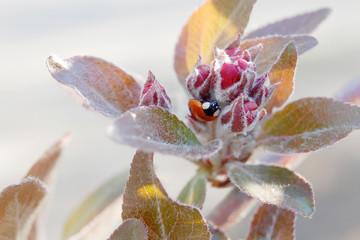 ladybug leaves