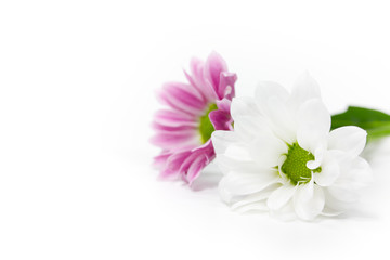 zwei Blüten