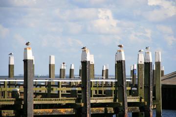 Möwen am Hafenkai Ostsee