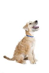 dog on white cutout background
