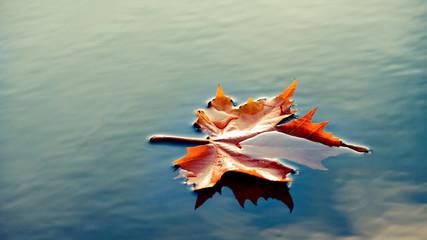 Einzelnes Blatt im Wasser