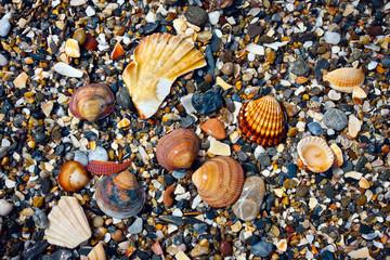 Shells and shingles