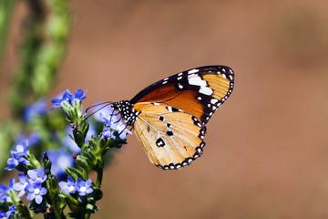 Butterfly at Kirstenbosch National Botanical Gardens