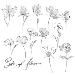 Sketch of flowers