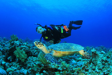 Scuba Diver and Hawksbill Sea Turtle