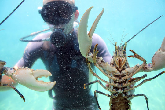 lobster and diver