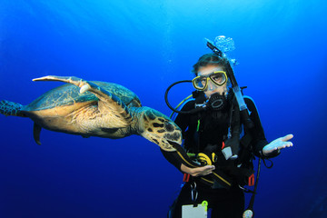 Female Scuba Diver encounters curious Hawksbill Sea Turtle