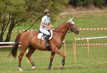 compétition équitation