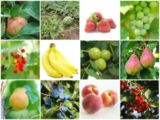 Healthy fruit collage
