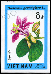 VIETNAM - CIRCA 1984 Bauhinia grandiflora